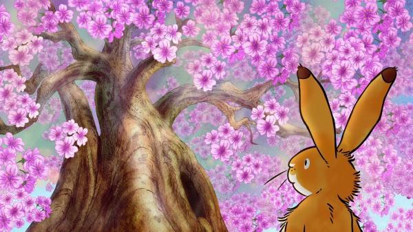 Der kleine braune Hase ist sehr beeindruckt vom großen Blütenbaum.   Rechte: KiKA/SLR Productions Australia Pty.Ltd./Scrawl Studios Pte Ltd./hr/ARD