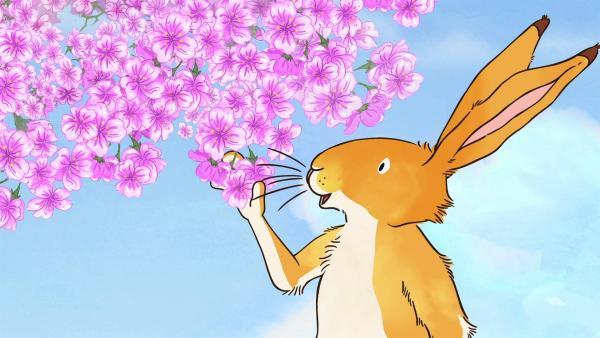 Der kleine braune Hase betrachtet den schönen Blütenbaum.   Rechte: KiKA/SLR Productions Australia Pty.Ltd./Scrawl Studios Pte Ltd./hr/ARD