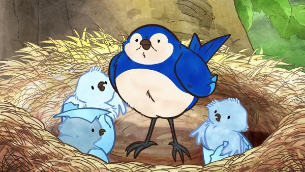 Der kleine braune Hase besucht Blauvogel und seine frisch geschlüpften Vogelkinder.   Rechte: KiKA/SLR Productions Australia Pty.Ltd./Scrawl Studios Pte Ltd./hr/ARD