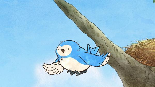 Blauvogels Vogelkinder werden flügge. | Rechte: KiKA/SLR Productions Australia Pty.Ltd./Scrawl Studios Pte Ltd./hr/ARD