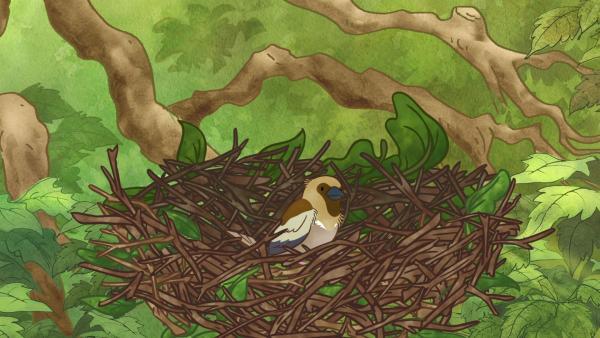 Und schon gibt es einen kleinen Interessenten für das Nest im Baum. | Rechte: KiKA/SLR Productions Australia Pty.Ltd./Scrawl Studios Pte Ltd./hr/ARD
