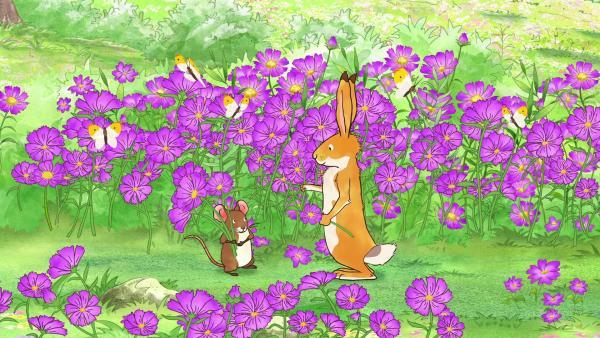 Der kleine Hase und die kleine Feldmaus sind so begeistert von den Blumen, dass sie für all ihre Freunde einen Strauß pflücken wollen. | Rechte: KiKA/SLR Productions Australia Pty.Ltd./Scrawl Studios Pte Ltd./hr/ARD