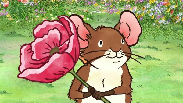 Die Feldmaus beschließt die wunderschöne Blume, die sie auf der Wiese entdeckt hat, zu ihrem allerliebsten Lieblingsding zu erklären und mit nach Hause zu nehmen. | Rechte: KiKA/SLR Productions Australia Pty.Ltd./Scrawl Studios Pte Ltd./hr/ARD