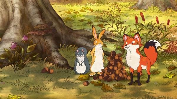 Der kleine braune Hase, das kleine Grauhörnchen und die kleine Rotfüchsin stapeln Eicheln für Grauhörnchens Wintervorrat.   Rechte: KiKA/SLR Productions Australia Pty.Ltd./Scrawl Studios Pte Ltd./hr/ARD