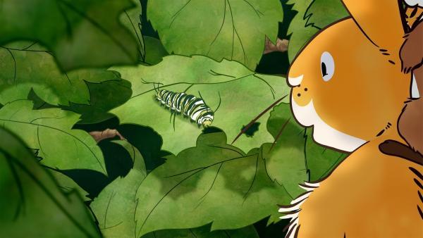 Der kleine Hase und die kleine Feldmaus spielen auf der Wiese Verstecken als sie eine ungewöhnliche Entdeckung machen. Auf einem Busch sitzt ein merkwürdiges, kleines grünes Wesen. | Rechte: KiKA/SLR Productions Australia Pty.Ltd./Scrawl Studios Pte Ltd./hr/ARD