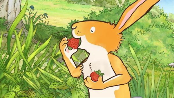 Der kleine Hase kann der Versuchung nicht widerstehen und isst die Erdbeeren auf, bevor er beim großen Hasen ankommt. | Rechte: KiKA/SLR Productions Australia Pty.Ltd./Scrawl Studios Pte Ltd./hr/ARD