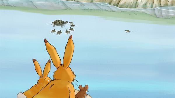 Der kleine Hase beobachtet mit dem großen Hasen und der kleinen Feldmaus die Schildkröten im Fluss.   Rechte: KiKA/SLR Productions Australia Pty.Ltd./Scrawl Studios Pte Ltd./hr/ARD