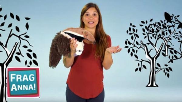 Ameisenbär, Mausohr, Nacktschnecke / Anna erklärt, warum der Ameisenbär so eine lange Schnauze hat. | Bild: BR/TEXT + BILD Medienproduktion GmbH & Co. KG | Rechte: BR/TEXT + BILD Medienproduktion GmbH & Co. KG