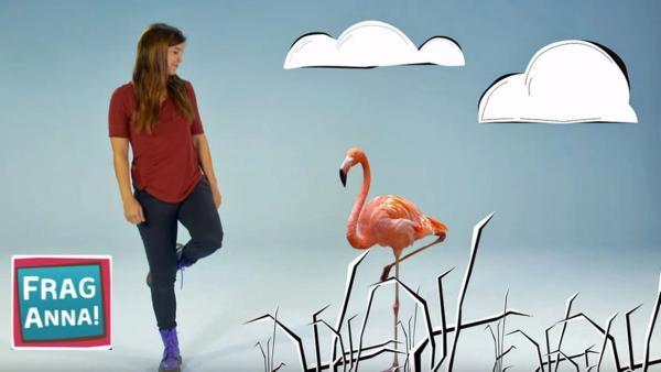 Flamingo, Wisent, Raubkatze | Bild: br/text und bild | Rechte: br/text und bild