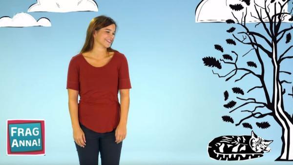 Schnurren, Ameisenbär, Erdmännchen | Bild: BR / text und bild | Rechte: BR / text und bild