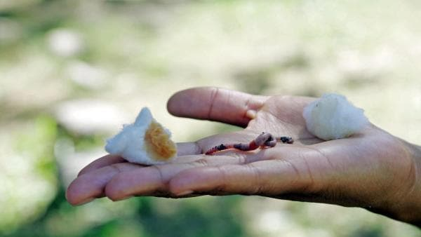 R wie Regenwurm | Pia hält einen Regenwurm auf ihrer Hand, der sich für Süßes oder Saures entscheiden soll. | Bild: BR | Text und Bild Medienproduktion GmbH & Co. KG | Rechte: BR | Text und Bild Medienproduktion GmbH & Co. KG