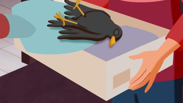 Der tote Vogel soll im Schuhkarton beerdigt werden. | Rechte: ZDF und WunderWerk GmbH