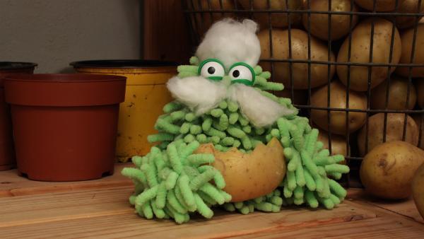 Mop hat sich aus Watte Bart und Haare gebastelt. | Rechte: NDR/Trikk17