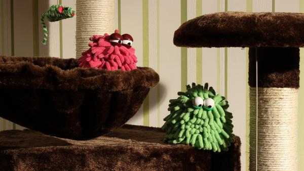 Wisch & Mop spielen Verstecken auf einem Katzenbaum. | Rechte: NDR/Trikk17