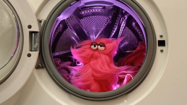 Nach einem Waschgang in der Waschmaschine sieht Wisch etwas anders aus... | Rechte: NDR/Trikk17