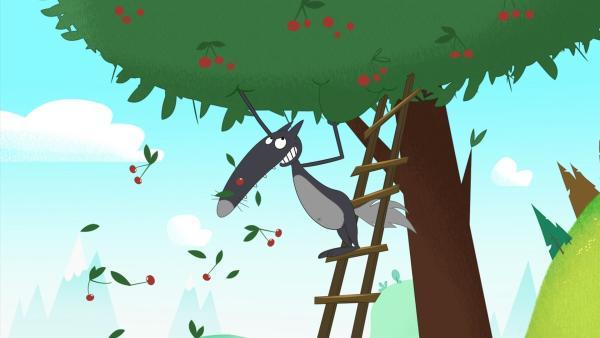 Beim Kirschenpflücken möchte Wolf hoch hinaus. | Rechte: KiKA/Samka Productions