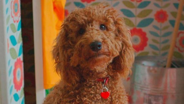 Die Familie Brockmann-Bell mit ihrem Wunderhund Wuffel | Rechte: ZDF/Darrall MacQueen