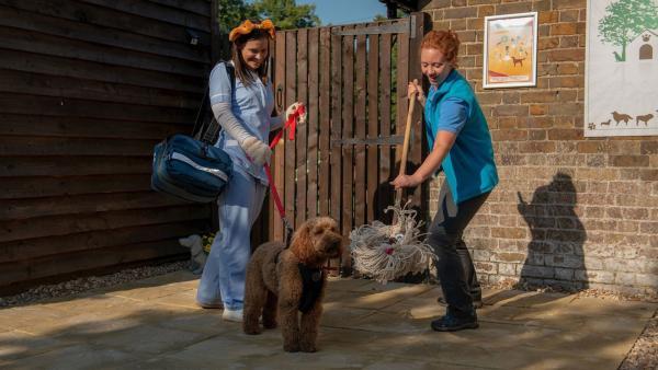 Tess (l. Andrea Valls) kommt mit Wuffel zu Angelas Hundepension. | Rechte: ZDF und Darrell MacQueen