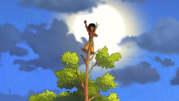 Kleiner Dachs ist auf den Wipfel eines hohen Baumes geklettert. | Rechte: WDR/Storimages