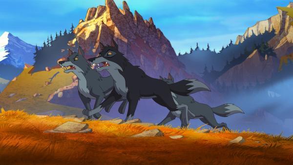 Die jungen Wölfe sind ohne ihren Leitwolf manchmal orientierungslos und unbeherrscht. | Rechte: WDR/Storimages