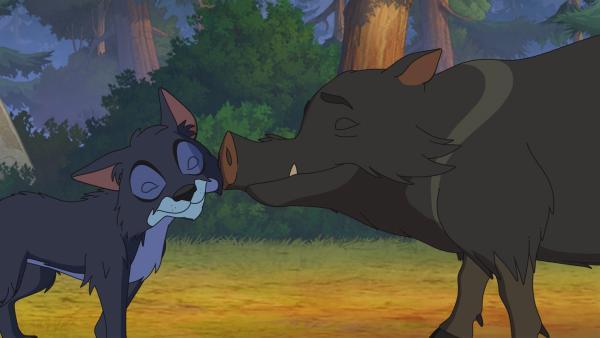 Pekari Grauer Kragen kümmert sich liebevoll um ein Wolfsjunges. | Rechte: WDR/Storimage