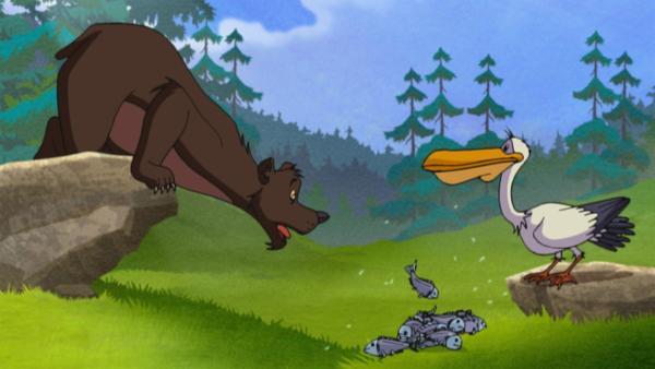 Der Pelikan bringt seinem Freund Grizzly Fische. | Rechte: WDR/Storimages