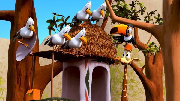 Bruno, der Giraffen-Teenager, unterstütz Toni, den Tukan, denn der fühlt sich in seinem Haus nicht mehr wohl. Die frechen Möwen belagern Tonis Heim, weil sie hoffen, dass er wieder einen Keks bei sich hat. | Rechte: ZDF/Grid Animation, TELEGAEL
