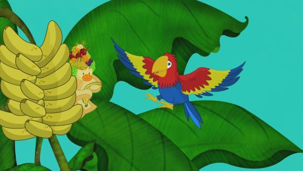 QuackQuack und der Papagei in einem Bananenstrauch in Brasilien.   Rechte: KiKA/Mike Young Productions