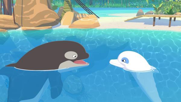 Zoom (r.) hat einen neuen Freund, den Orca-Wal Billy (l.). Doch leider sind die Inselbewohner nicht glücklich über den Neuankömmling, denn sie befürchten, dass er ihnen alle Fische vor der Küste wegfressen wird.   Rechte: ZDF/Media Valley/Marzipan Films