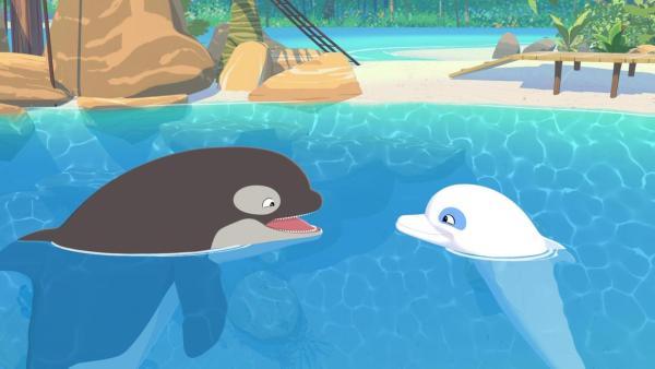 Orca-Wahl Billy (links) schaut freudig mit offenem Maul zu Delfon Zoom (rechts) herüber. Beide schwimmen in Meer, hinter ihnen ist der Strand der Insel zu sehen.   Rechte: Media Valley/Marzipan Films - 2020